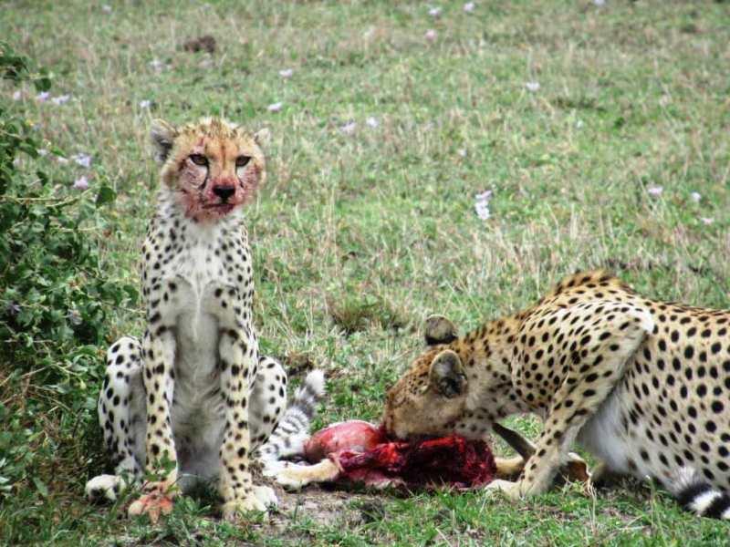 Ngorongoro Serengeti Budget Safari
