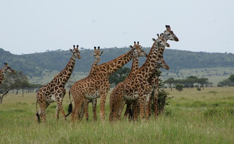 Wildlife - Tanzania Luxury Camping Safari