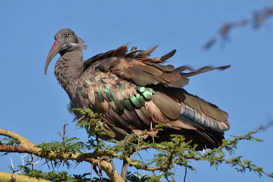 anapa-bird-2