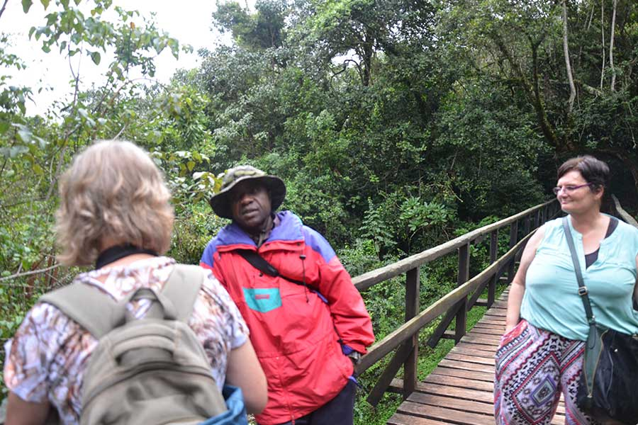 1 Dy Kilimanjaro Trekking