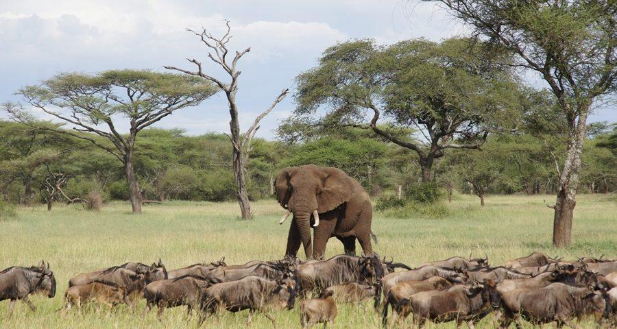 7 Days - Lake Victoria Serengeti Trip