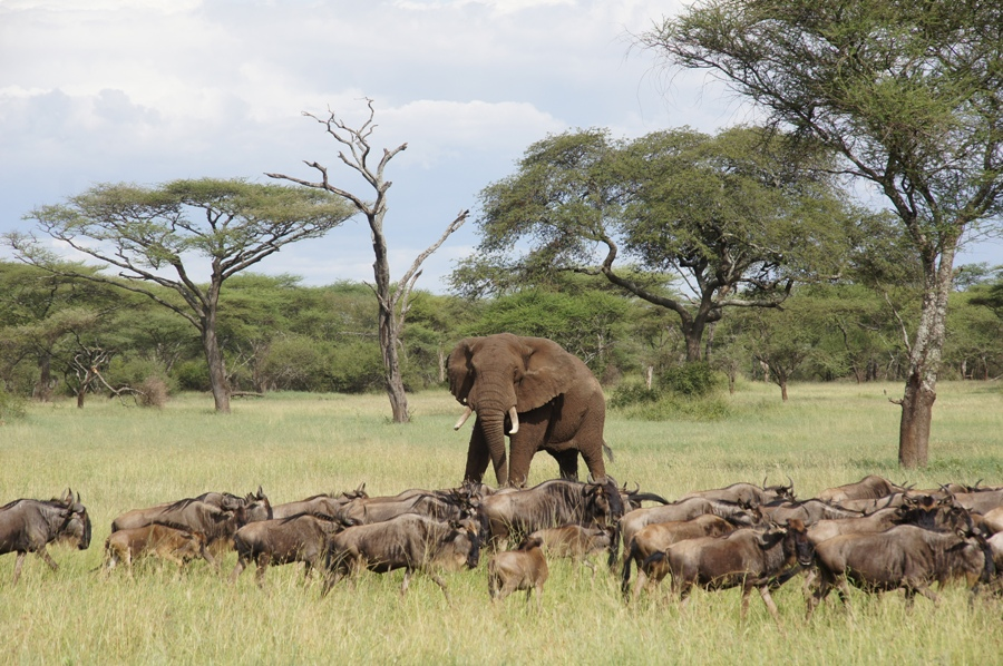 7 Days - Lake Victoria Serengeti Trip