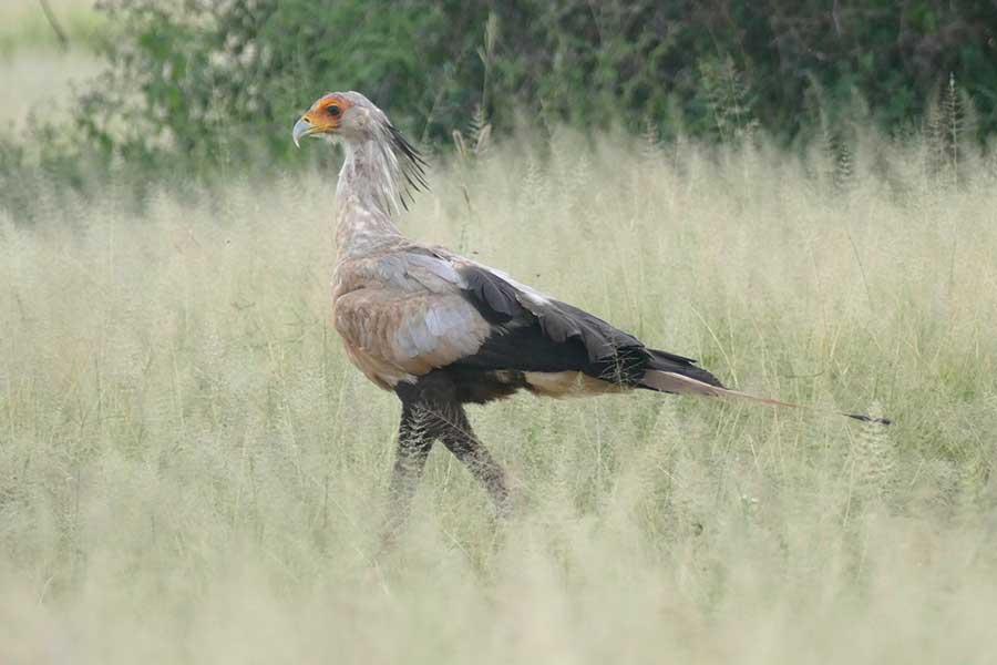 tarangire-bird1