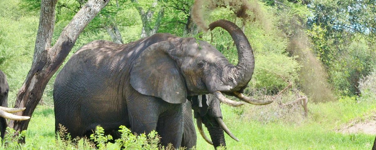 3 Days Tarangire, Ngorongoro