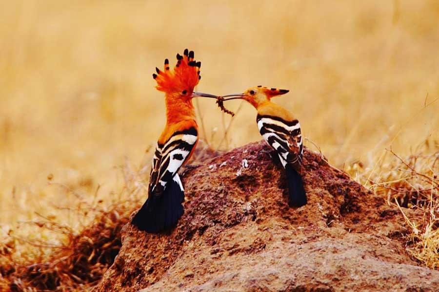 wildromantic