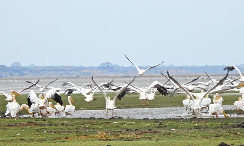 Manyara-Ngorongoro-Serengeti-Itinerary