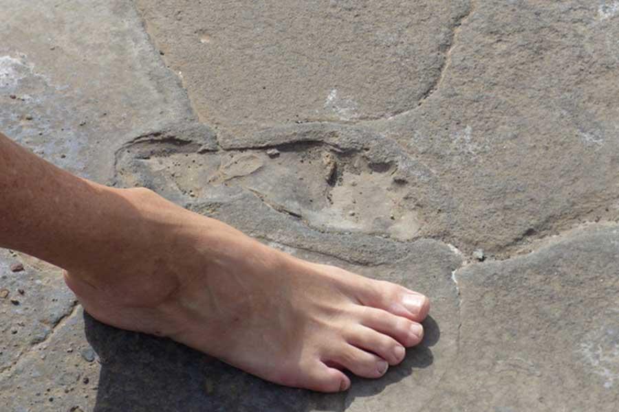 natron-leg